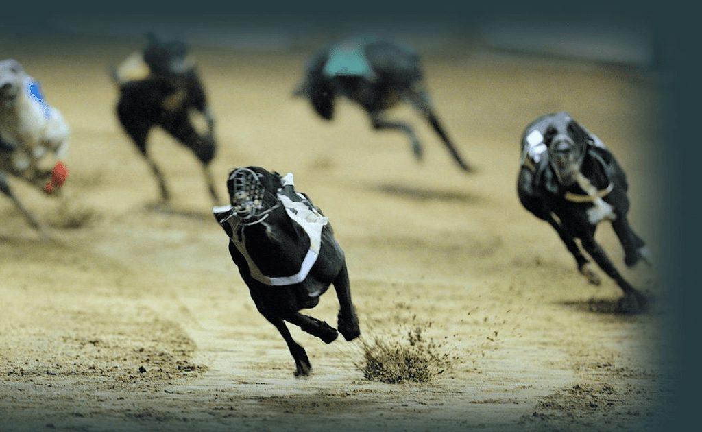 Стратегия ставок на собачьи бега